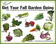 Fall Garden Veggies... nice visual reminder of what grows well into fall harvests or under hoops