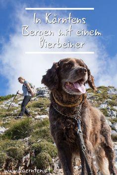 Hier findest du die interessantesten Wanderwege und Wandertipps für deinen Urlaub mit Hund in Österreich. Kärnten bietet dir Berge und Seen, Ausflugsziele und hundefreundliche Gastgeber. English Pointer Dog, Seen, Sport, Dogs, Animals, Animals Dog, Cats, Pet Dogs, Hiking Trails