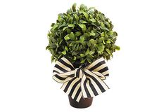 Boxwood in Black Pot on OneKingsLane.com... The French Bee- adorable