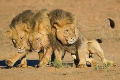 - Les trois frères....