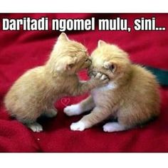 25 Meme kucing yang imut, ngegemesin dan bikin ketawa | Brilio.net