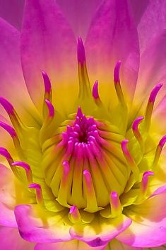 ~~Pink Lilly | waterlily macro by Gopu raj~~