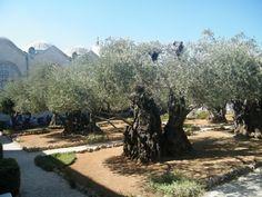 Cristianismo e Espiritualidade: Terra Santa: Monte das Oliveiras - Cenáculo…