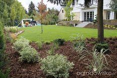 Zimozielony ogród przy białym domu - strona 144 - Forum ogrodnicze - Ogrodowisko