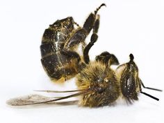 New government survey shows 1/3 of our honey bees died over the winter. http://sanfrancisco.cbslocal.com/2013/05/23/pesticides-may-be-to-blame-for-bee-die-off-in-california-nation/