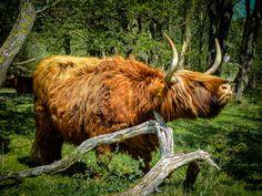 Stephen Cassidy - Zuid-Kennemerland - #Schotsehooglander