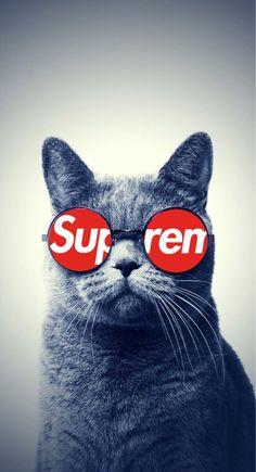 Pinterest: @andresilvaa1904   Instagram: @andresilvaa1904  #supreme #wallpaper #cat