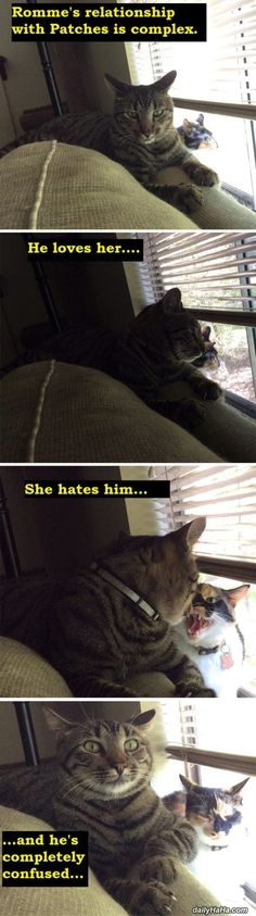 Confusing Relationship - These cute cats have a very confusing relationship. Dailyhaha is your daily dose of laughs!