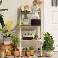 Jardim Vertical Segredo E Cuidar - Imaginarium