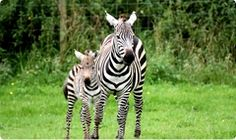 Meet Lions, Tigers, Elephants, Rhinos and more at Noah's Ark Zoo Farm £45