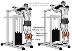 Build and strengthen your calves with the machine standing calf raise! The exercise targets your gastrocnemius, while your soleus acts as a synergist. Beginner Leg Workout, Leg Workouts For Men, Best Leg Workout, Workout For Beginners, Butt Workout, Calf Workouts, Chest Workouts, Calf Training, Weight Training