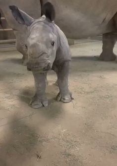 tiere Handsome rhino gets the brushie brushie animals baby animals adorable brushie Handsome rhino Tiere Cute Little Animals, Cute Funny Animals, Funny Cute, Mother And Baby Animals, Animals Crossing, Baby Rhino, Baby Elephants, Cute Baby Elephant, Save The Elephants