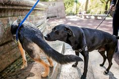 Learning From Dogs as They Sniff Out Their World - The New York Times