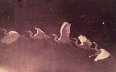 Étienne-Jules Marey, Flight of a Heron (Chronophotographic plates), c. Eadweard Muybridge, Bird Art, Beautiful Birds, Beautiful Images, Beautiful Things, Belle Photo, Birds In Flight, Illusions, Fantasy