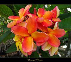 https://www.flickr.com/photos/lopaka/8756594658/