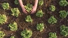 Grow your own lettuce.  LoL from our chat this afternoon about growing own veggies