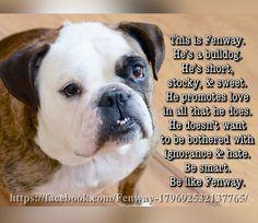 26Jan16 Fenway - Bulldogs - Be Smart - Be Like - Words of Wisdom - Love - Peace - Tolerance