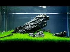 It's difficult knowing where to start with so many aquarium kits on the market. And all you want is to find the best aquarium kit for your needs. Saltwater Aquarium, Planted Aquarium, Freshwater Aquarium, Aquarium Fish, Aquarium Aquascape, Aquarium Landscape, Shrimp Tank, Fishing World, Aquarium Design
