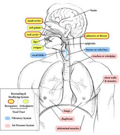 Learning About the Voice Mechanism