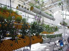 """suspended airpot hydroponic system... """"between air"""" by Selgascano in conjunction with Josep Selga & Juan Laureano"""