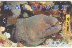 MALDIVES ISL. - Moray Eel, CN : 256MLDGIB, Used Maldives, Pets, Animals, The Maldives, Animals And Pets, Animales, Animaux, Animal, Animais