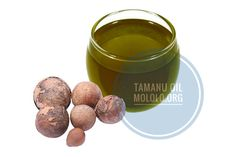 Tamanu Oil is extracted from the Nut kernels found in the evergreen tree called Calophyllum inophyllum. Tamanu Oil was discovered by the native people of Tahiti some thousands of years ago. Tamanu Oil, sometimes called beauty-leaf oil, kamanu oil, Tamanu Nut oil, ball nut tree oil, ball nut oil,