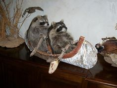 Anne Dickens   The Day After Yesterday: Taxidermy Gone Wrong. Again. Marvellous
