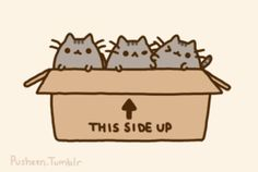 Pusheen kitties in box