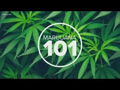 Telling the Difference: Marijuana, Hemp and CBD Oils For Dogs, Cannabis Oil, Oils For Skin, Hemp Oil, Different, Medical, Fall Flowers, Stoner, Reading