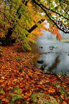 Lovely Autumn Shot!