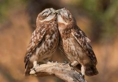 Мудрая птица / Путешествия / Моя Планета