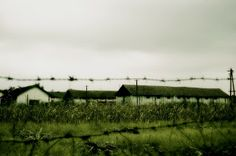 Barba Albastra: green monday