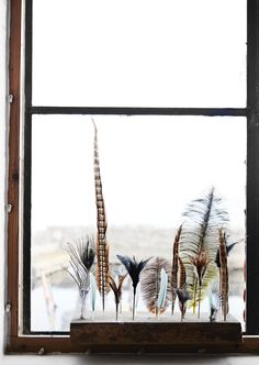 Feathers   Photo by madamstoltz on Instagram