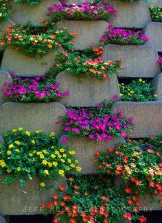 Flower, Dollywood, Pigeon Forge, Gatlinburg, Jeff Mullins Photography Bottle Garden, Garden Shop, Flowers, Garden Decor, Garden Design, Chinese Garden, Garden Patio Furniture, Plants, Lush Lawn