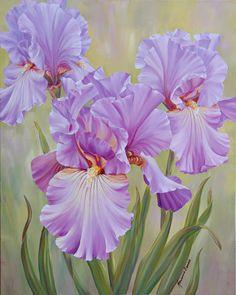 Marianne Broome — Mauve Irises (576x720)