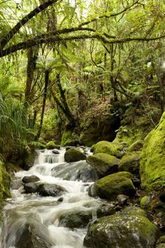"""""""National Geographic: Waterfalls on the Waiomu Creek and native forest."""