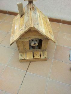 Pallet dog house. More creative pallet ideas, pallets as decoration, interior decor, and DIY tutorials at http://pinterest.com/wineinajug/passion-for-pallets/