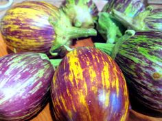 Udumalapet Eggplant!  Yellow, green, white, and purple striped.  Fruit about the size of a tennis ball.  Shoots and Platters