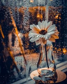 Raindrops and Roses: Photo Beautiful Flowers Wallpapers, Beautiful Nature Wallpaper, Pretty Wallpapers, Easy Flower Painting, Acrylic Painting Flowers, Rain Wallpapers, Cute Wallpaper Backgrounds, Cool Pictures For Wallpaper, Raindrops And Roses