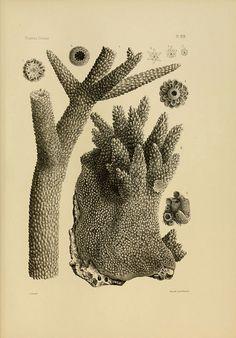 Coral reefs and islands Corals Florida Florida Keys (Fla.), Harvard University, MCZ Ernst Mayr Library