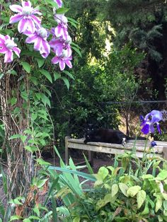 Maurice feeling confident enough to try out a new spot in the garden.