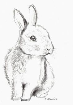 Drawing of a cute bunny. Used Derwent pencils. Fluffy Bunny by Christina Quine Pencil Art Drawings, Art Drawings Sketches, Easy Drawings, Sketch Art, Pencil Drawing Pictures, Fluffy Bunny, Bunny Art, Cute Bunny, Bunny Bunny
