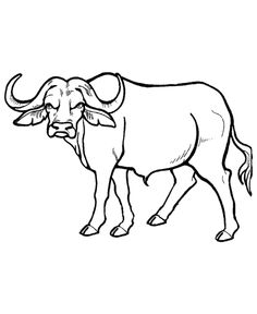 Wild animal coloring page | African Buffalo Coloring page