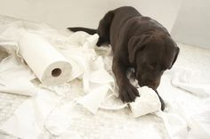 Setting up a Puppy Playpen