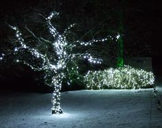 Rookesbury Park School Hants | Cool white pealights to trees and shrubs by www.stressfreehire.com #venuetransformers