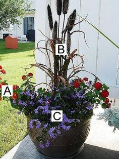Container Flower Gardening Ideas: A=Lantana B=Ornamental Millet C=Fan Flower (Scaevola) Container Flower Gardening Ideas: Lantana, Ornamental Millet, Fan Flower  This arrangement creates a huge contrast! It takes the idea we introduced with