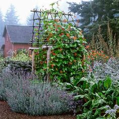 Scarlet runner beans, lavender, and yellow-stemmed chard form a brilliant ensemble. | Photo: Marion Brenner | thisoldhouse.com
