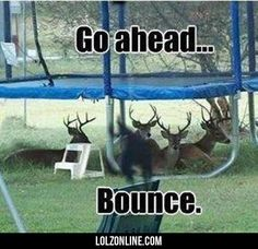 OMG!!!!! JAMES POTTER FINALLY LEARNED TO MAKE DEER FRINDS!!!<<<repinning to my HP board just for that comment