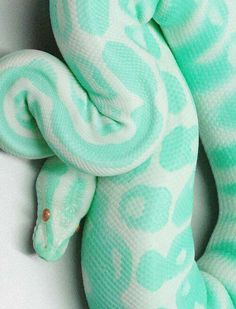 Vivora turquoise