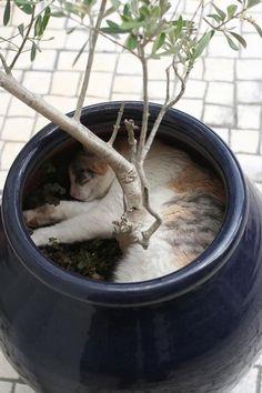 gatodescansado1